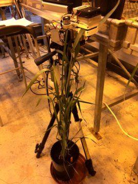 بارقه های امید برای محصول گندم فراوان تر