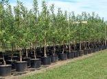 14 نوع گونه درختی طی هفته منابع طبیعی و آبخیزداری درشهرستان مهدیشهر توزیع میشود