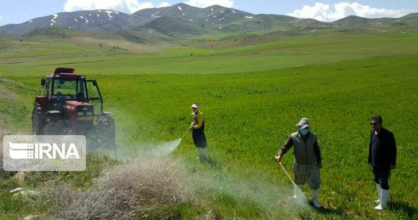 ۶۰ هزار هکتار از مزارع سقز آفتزدایی شد
