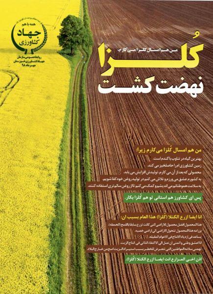 80 هزار هکتار از مزارع استان خوزستان به کشت کلزا اختصاص مییابد