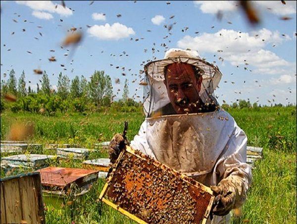 کوچ زنبورداران مهاجر به استان بوشهر