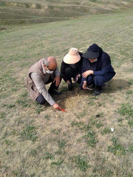 بازدید از مراتع خراسان شمالی برای ردیابی آفت ملخ