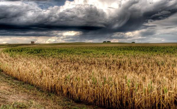 بارشها نصف شد، پیشبینیها تلخ