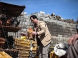 مردم از خرید طیور زنده  و شکار در حیات وحش خودداری کنند