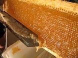 برداشت سالانه ۷۰ تن عسل در ملکشاهی