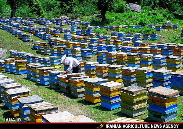 صنعت زنبورداری دماوند توسعه می یابد