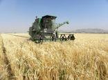 کیلگیری از مزارع جوی دیم شهرستان شهرکرد آغاز شد