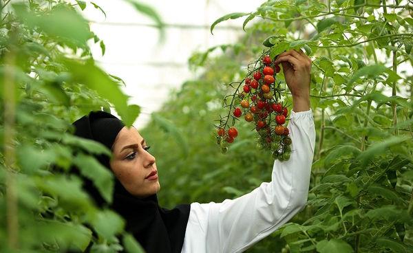 پرورش گیاهان خاص در کمبود آب