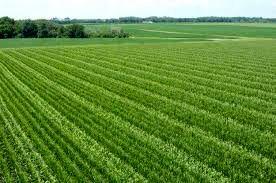 میانگین زمین کشاورزان خراسان شمالی از کشوری بیشتر است