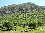 اجرای طرح جنگلکاری اقتصادی در اراضی چهارمحال و بختیاری