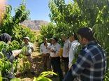 حضور یاوران تولید در باغات شهرستان سامان