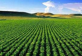 افزایش 2.5 برابری بهره وری با  توسعه شرکت های سهامی زراعی