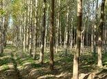 بهرهگیری از ظرفیت پادگانهای نیروهای مسلح برای توسعه زراعت چوب و فضای سبز