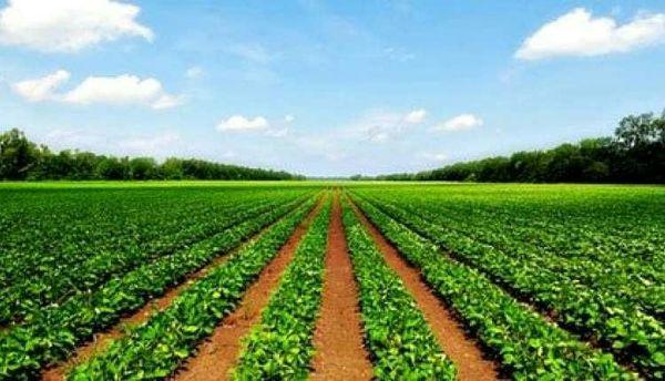 کشاورزی مدرن رمز خروج از بحران بیکاری