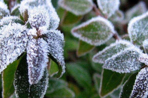 کشاورزان قزوین مراقب سرمازدگی باغات در روزهای آینده باشند
