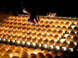 حمایت از تولید کننده و مصرفکننده با برنامه ملی ارتقاء کیفیت بهداشتی تخم مرغ
