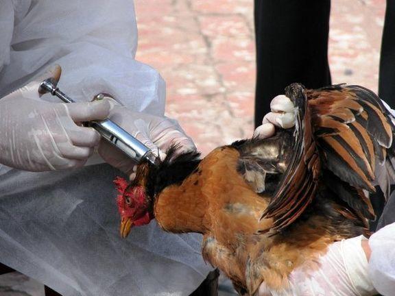 ورود واکسن آنفلوآنزای پرندگان و شروع برنامههای تزریق
