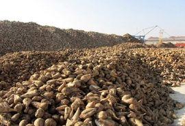 تحویل 58هزار تن چغندر به کارخانههای قند در خراسان شمالی
