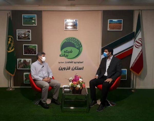 اهمیت کشت دانههای روغنی کلزا موضوع برنامه استودیو کشاورز استان قزوین
