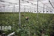 هفت طرح کشاورزی و دامپروری در شهرستان رفسنجان  به بهره برداری رسید