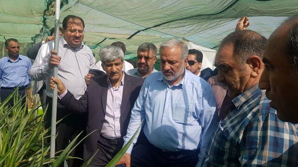 سرمایه گذاری ۵ هزار میلیارد تومانی برای توسعه گلخانه ها در کشور/ چابهار گلخانه طبیعی ایران است