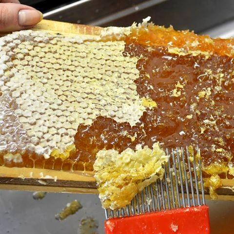 تولید 1100 تن عسل در شهرستان تبریز