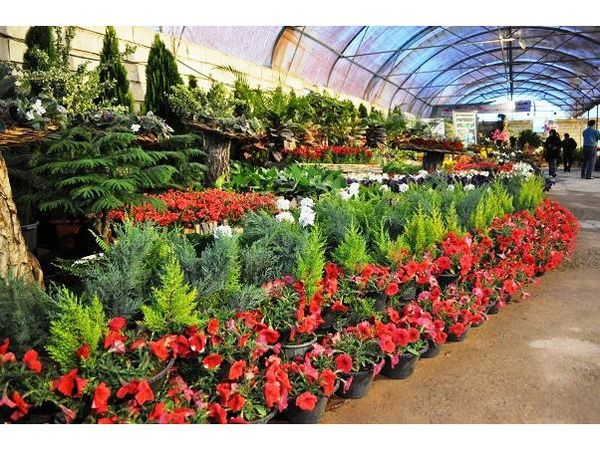 صادرات 32 هزار گلدان گل و گیاه زینتی از نوشهر به خارج کشور