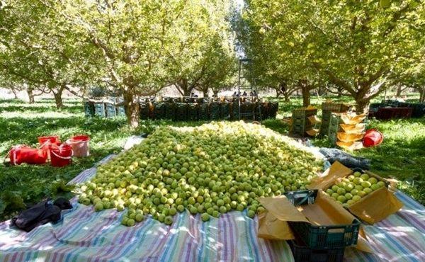 82 مرکز خرید سیب صنعتی در آذربایجانغربی فعال شد