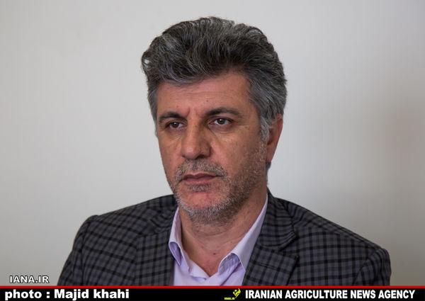 خوداتکایی ایران در تولید پنبه تا سال 1404