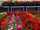 ایجاد پایانه صادراتی گل در خراسانجنوبی