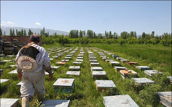 آغاز سرشماری زنبورستانهای کشور از 6 مهر