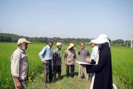 ۳۰ کارت شناسایی برای مددکاران مروج افتخاری در بخش کشاورزی سامان صادر شد
