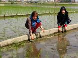 رشد کودک شهرنشین در گرو گردشگری کشاورزی
