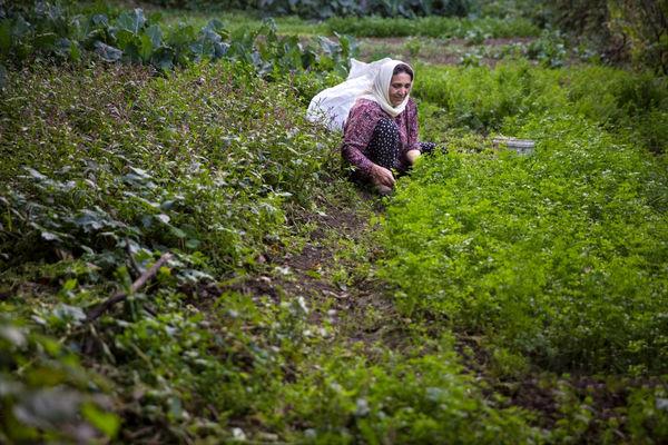 اقدامات مطلوبی در راستای مهاجرت معکوس روستائیان انجام شده است