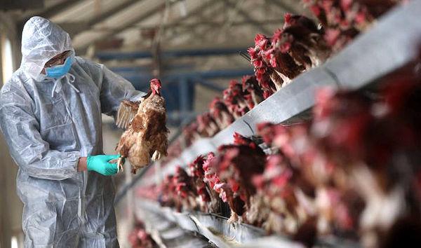 برنامهریزیهای جهاد موج جدید آنفلوآنزا را کنترل کرد