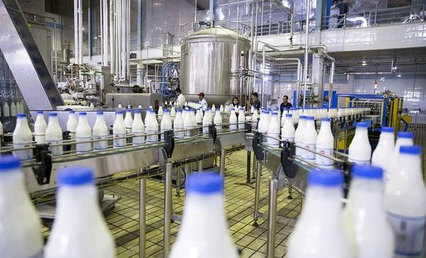 تولید سالانه 244 هزار تن شیر در کردستان