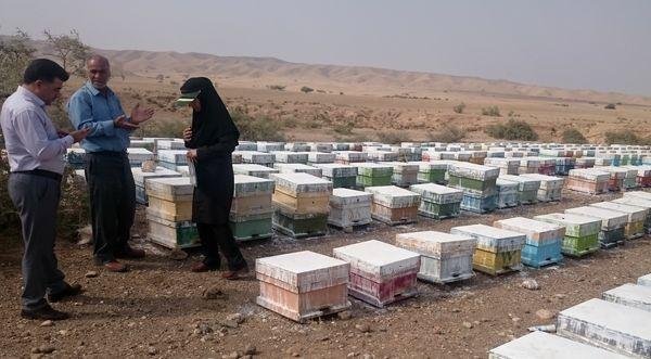 پایان سرشماری کلنیهای زنبورعسل در مهران