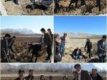 غرس۳۰۰ اصله نهال جنگلی در شهر فارسان