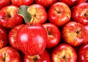 تولید 390 هزار تن سیب در فارس