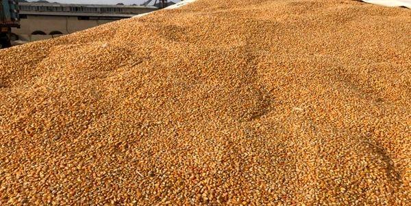 خرید تضمینی بیش از ۴۰۰ هزار تن گندم در کردستان