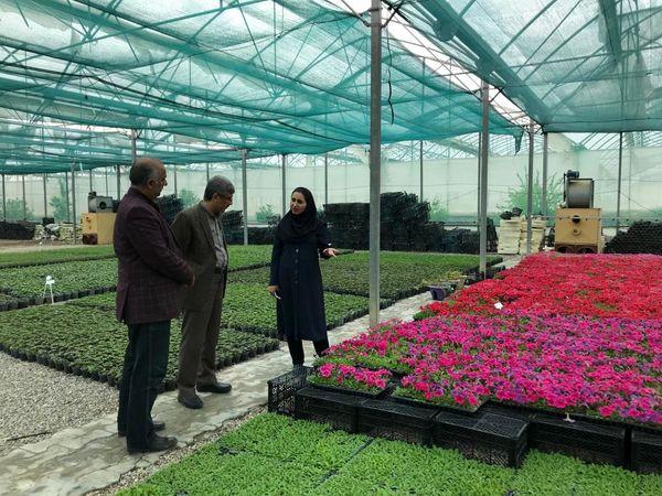 تولید ۶ میلیون عدد گل فصلی در مجتمع گلخانه ای سرخون