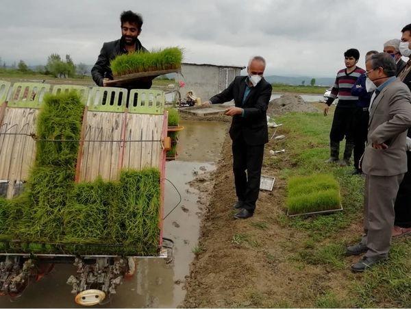 2.8 میلیارد تسهیلات خرید نشاکار برنج در میاندورود جذب شد