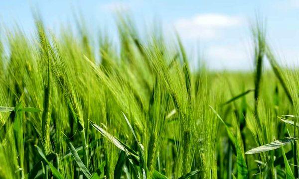 کشاورزیبابهرهوری بالا و آسیب کمتر به محیط زیست