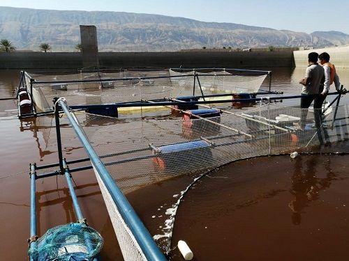 استفاده از چاههای آب کشاورزی در تکثیر و پرورش آبزیان