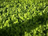 چشم امید سرپرستان خانوار ایلامی به چرخه سبز تولید