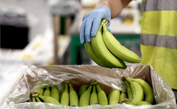 کاهش 24 درصدی واردات موز در سال جاری
