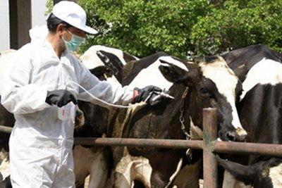 واکسیناسیون دام راهکاری مؤثر در راه مبارزه با تب برفکی
