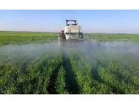 مبارزه شیمیایی در 56 هزار هکتار از مزارع گندم و جو