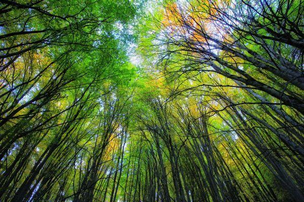 25 هزار هکتار جنگل در سمیرم وجود دارد