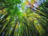 ۳۰۰ عکس برای «ثبت جهانی جنگل های هیرکانی»